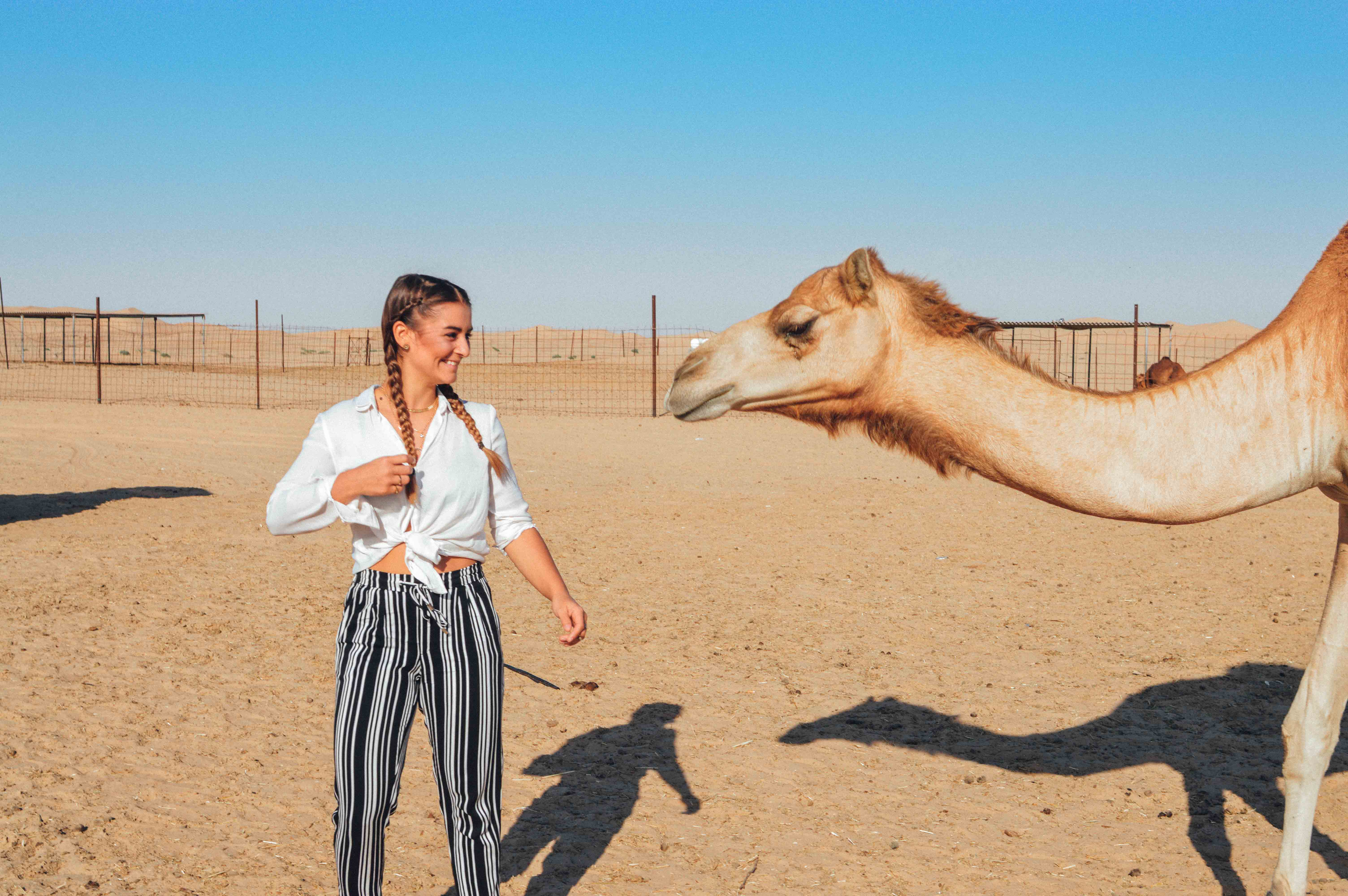 desert-camel-abu-dhabi